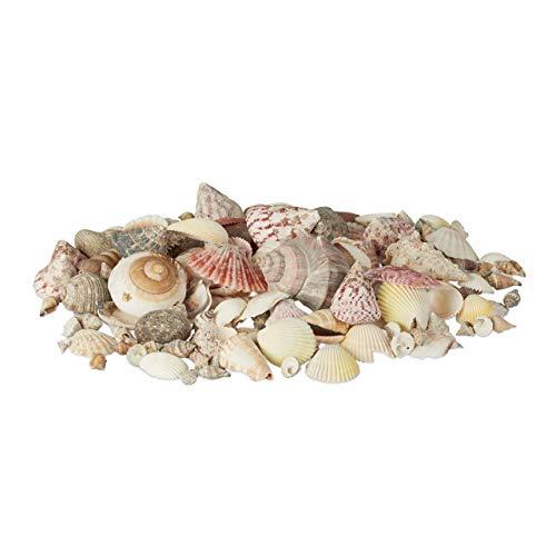 Relaxdays Muschel Deko im Set, Mix mit großen Meeresschnecken, Jakobsmuscheln, Stranddeko zum Basteln, maritim 1kg, bunt
