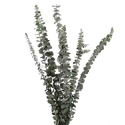 Eukalyptus Getrocknet, Lyeiaa 10 Stück Echt Trockenblumen, Getrocknet Blumen Deko, Natürlich Dried Flower Bouquet Trockenblumenstrauß, Schlafzimmer / Badezimmer / Balkon / Wohnzimmer Deko, Grün