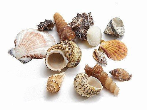 NaDeco Muschelmix Extra groß 1kg Muscheln und Schnecken im Mix Deko Muscheln zum Basteln Dekomuscheln zum Basteln & Dekorieren