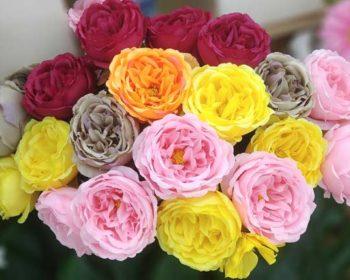 Rosen als Kunstblumen