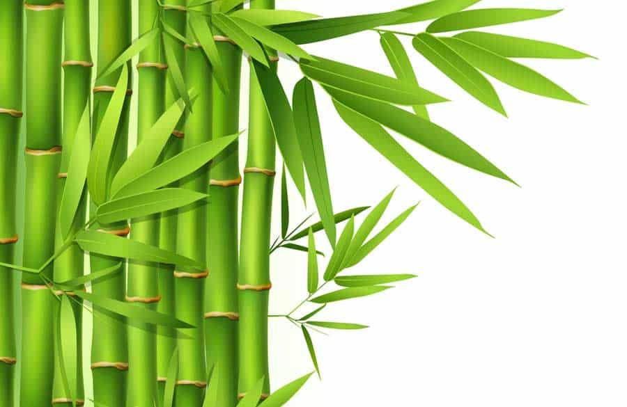 Wandtattoo-Bambus © depositphotos.com