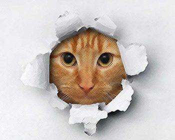 Katzenmotiv für ein Wandtattoo Tiere